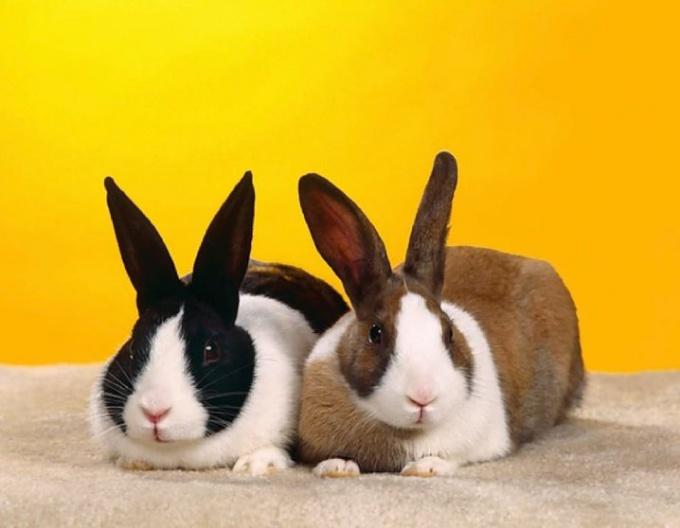 Преимущества вольерного содержания кроликов