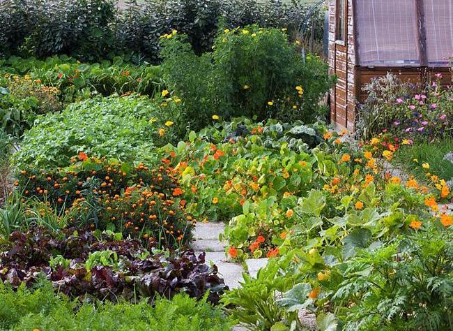 Как украсить огород по-французски
