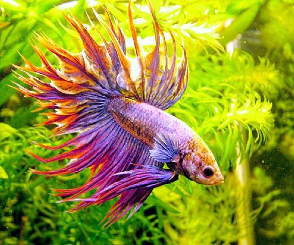 Какие бывают виды аквариумных фильтров