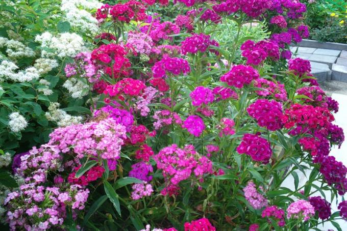 Особенности выбора цветов для своей дачи
