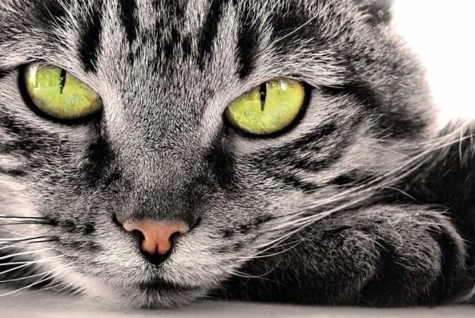 В сумерках кошки видят лучше, чем в темноте