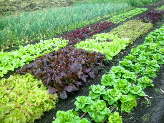 How to make the land fertile