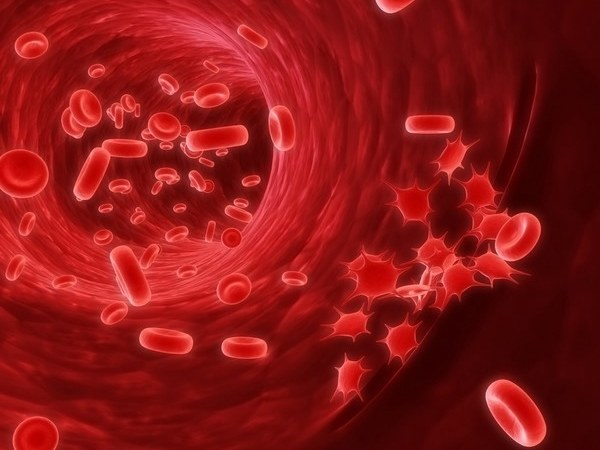 What is anisocytosis