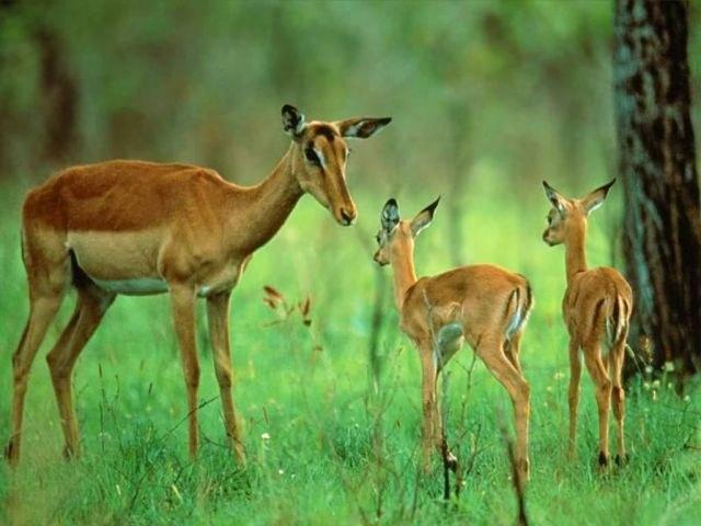 Единство фауны и флоры