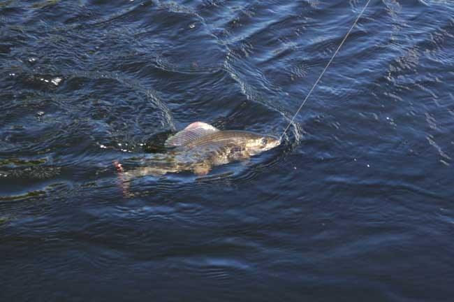 Как рыбачить в речке с быстрым течением