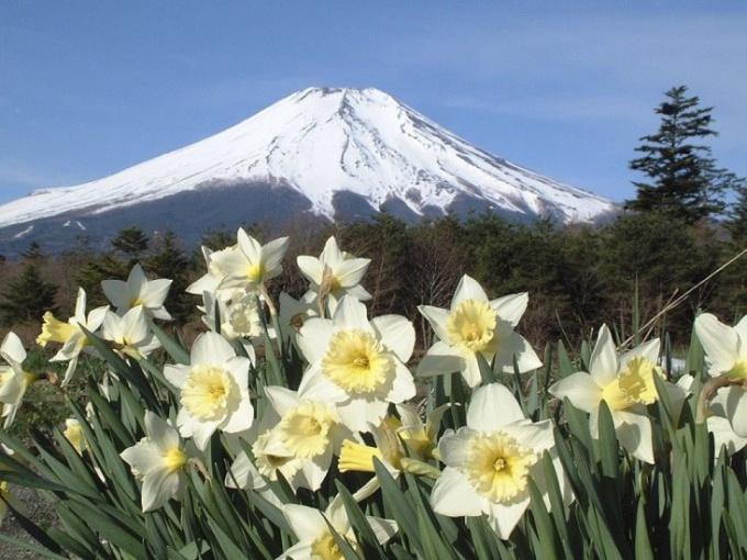 """Почему Японию называют """"страной восходящего солнца"""""""