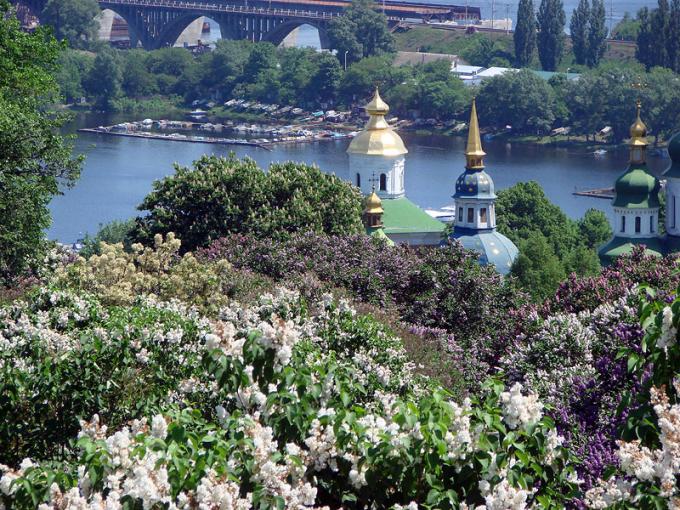Цветущие каштаны и сирень — настоящее украшение весеннего Киева