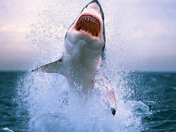 Как вести себя при встрече с акулой