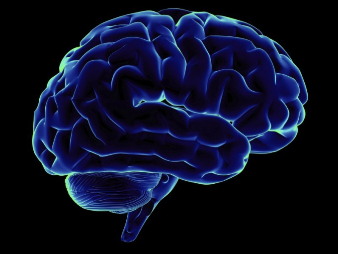 Как работает мозг человека