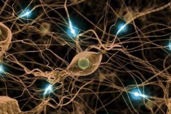 """Почему нерв называется """"блуждающим"""""""