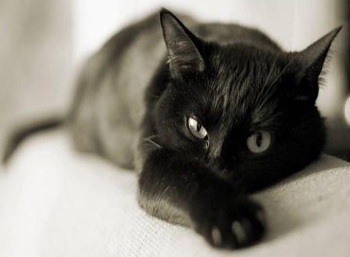 у кота заложен нос что делать