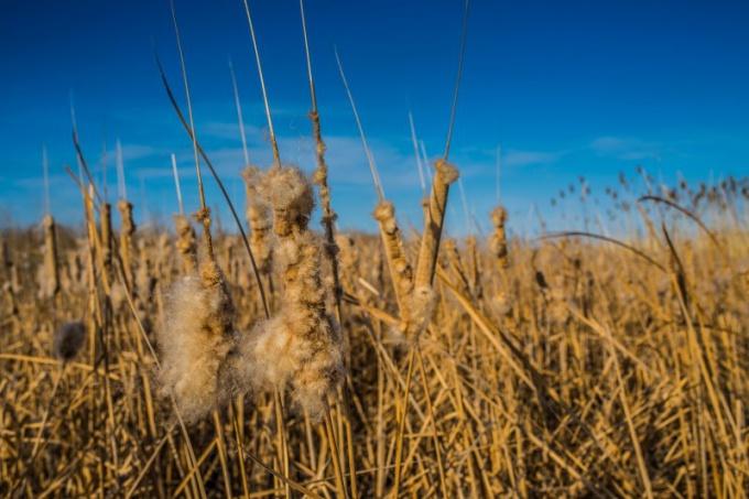 Вот такая примерно она трын-трава