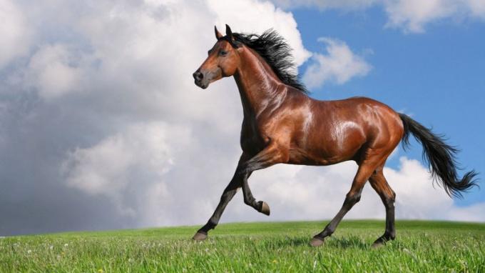 Можно ли человеку лечиться лошадиной мазью для суставов