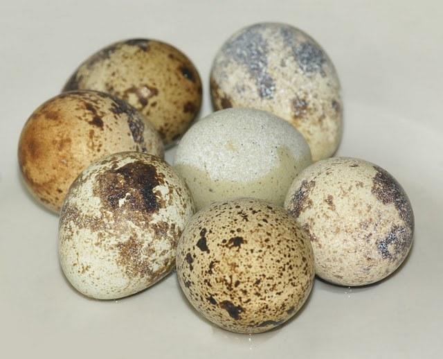 Сколько нужно варить перепелиные яйца
