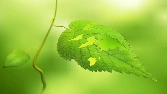 Что такое сетчатое жилкование листьев