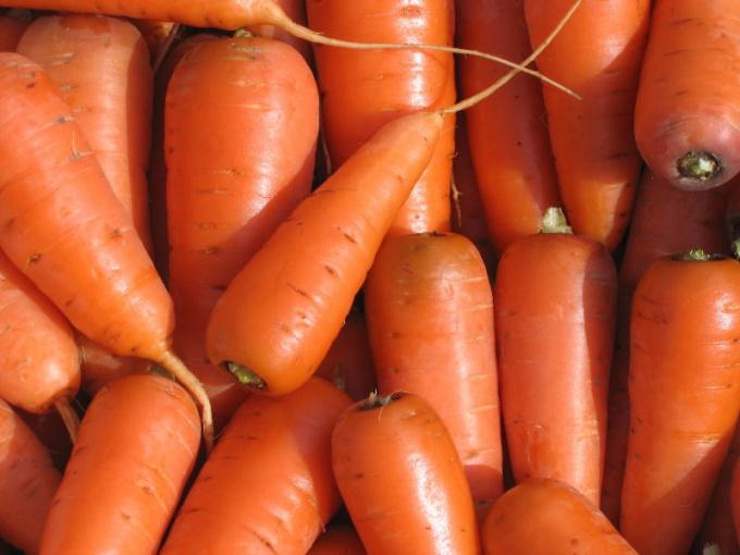 Как вырастить крупную морковь