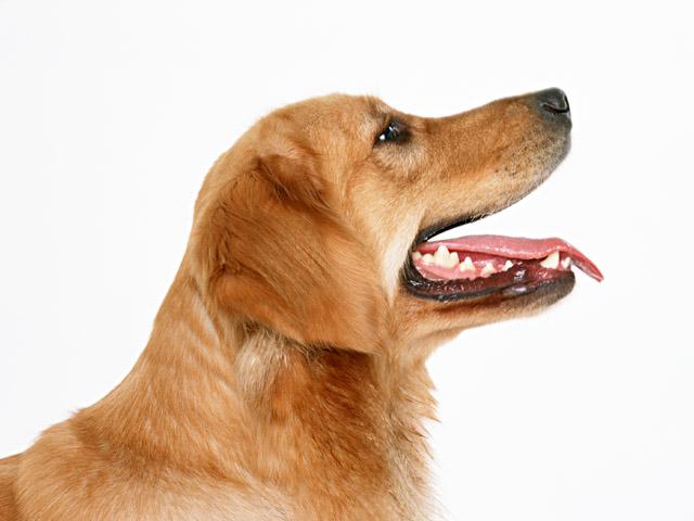 Как предотвратить нападение чужой собаки