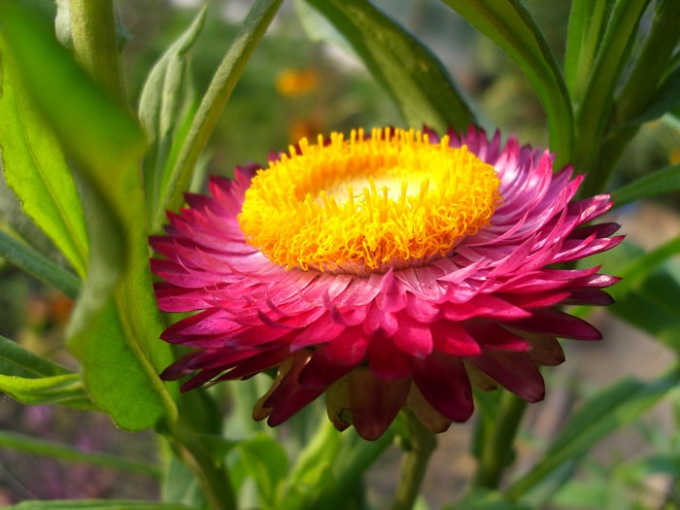 Цветы для зимнего букета