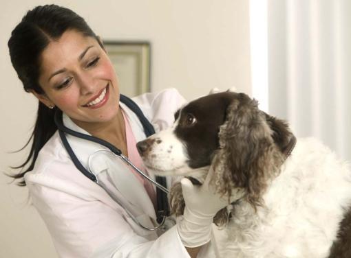 Как выбрать ветеринара