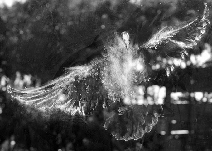 Птица стучится в окно - нехорошая примета.
