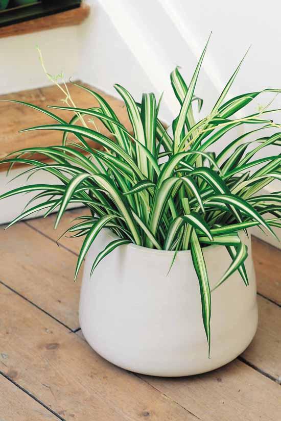 Десятка полезных комнатных растений