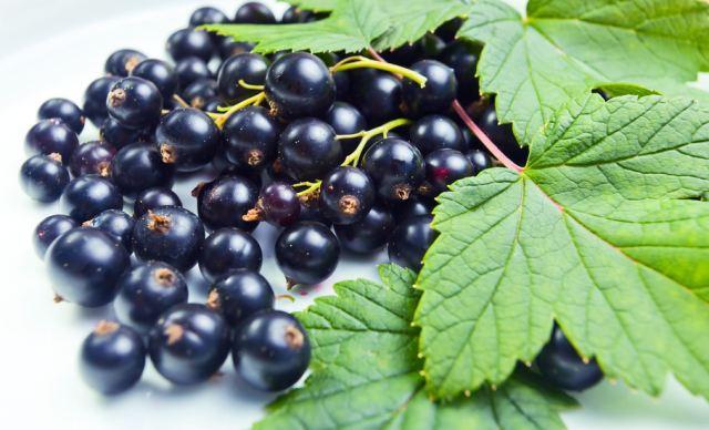 Что можно приготовить из смородины и ее листьев