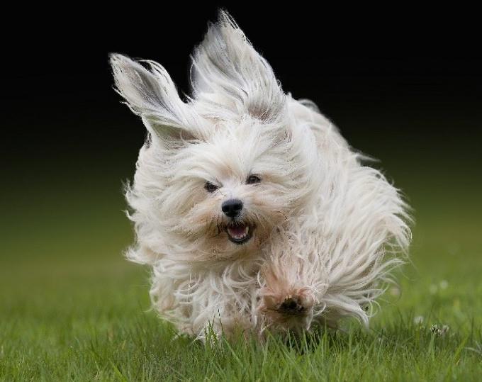 Из чего состоит шерсть собаки