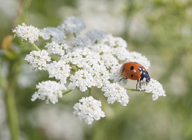 7 растений - помощников в саду