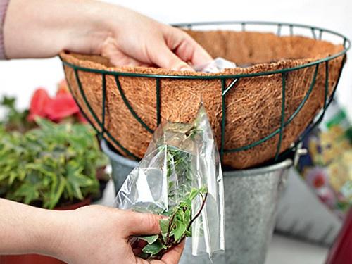 Как посадить растения в подвесную корзину