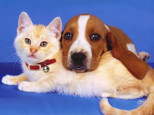Берегитесь укусов животных