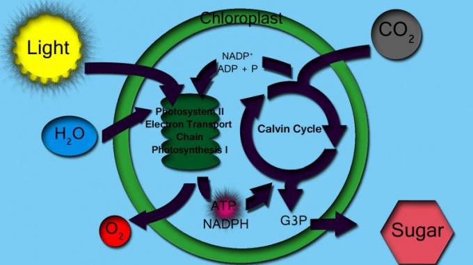 поглощение углекислого газа