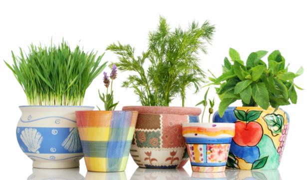 Топ-5 пряных трав, которые можно вырастить и дома