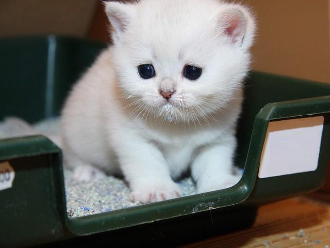 через сколько после еды можно дать котёнку вазелиновое масло