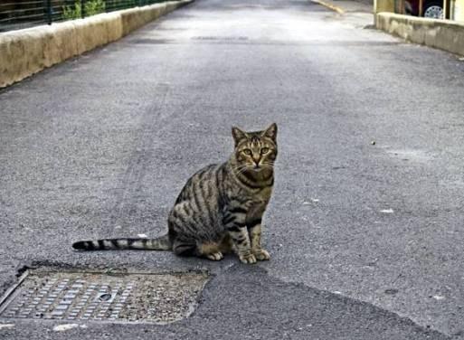 искать убежавшую кошку