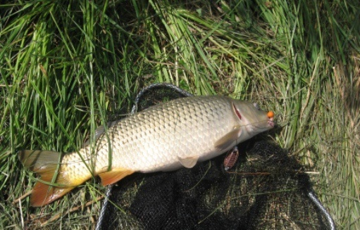 Как сделать ракету для прикорма рыбы своими руками