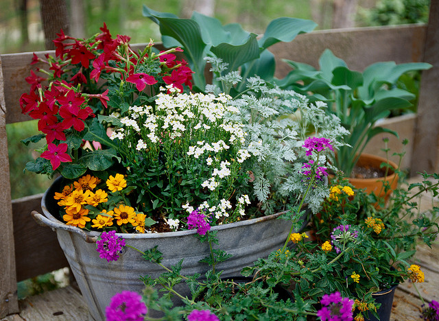 Flowers in containers for balconies and terraces