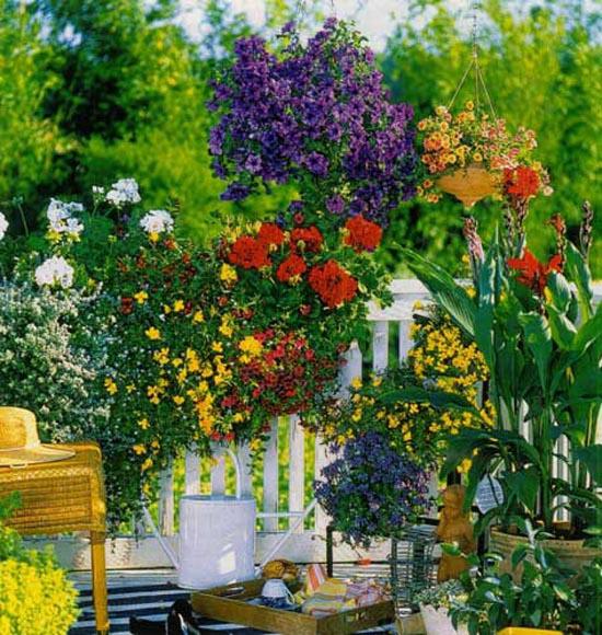 Ампель, полный роскошных цветов
