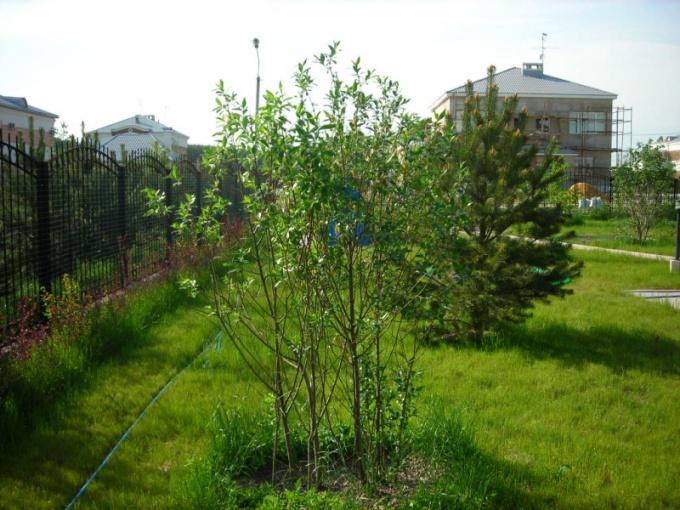 Как сажать деревья на участке