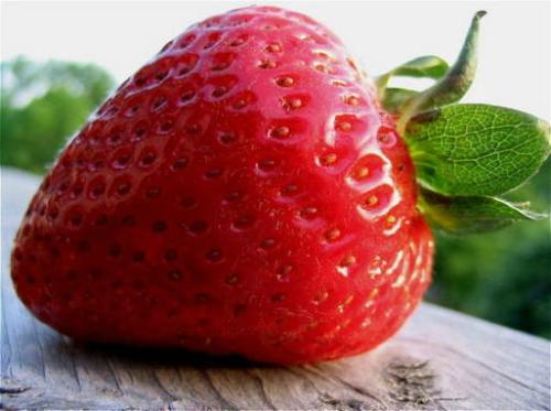 Как вырастить сладкую и крупную клубнику