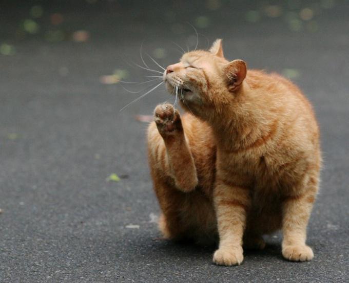 Приручить уличную кошку не так-то и просто!