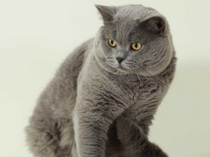 Сколько должен весить здоровый кот