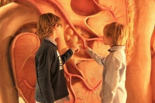 Музей человеческого тела в г. Лейден, Нидерланды