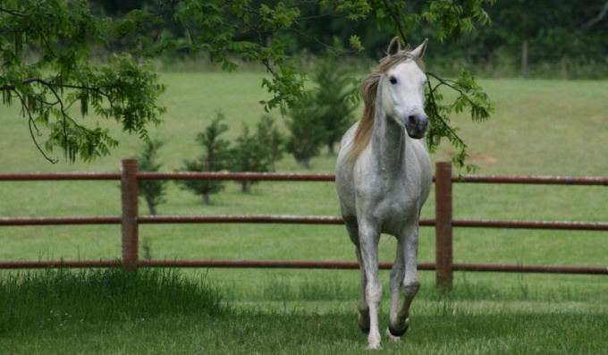 Как возвести загон для лошади