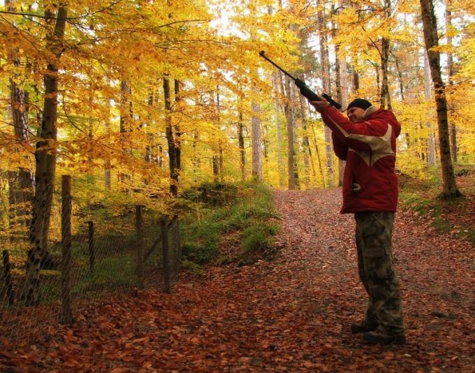 Как получить охотничью лицензию в 2017 году