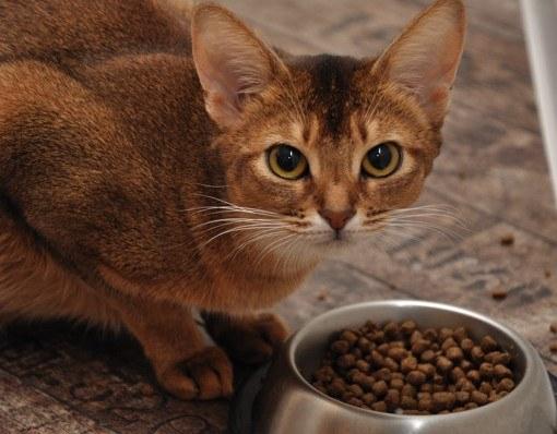 Как рассчитать долю еды для кота