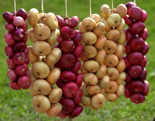 Лук и чеснок - первые витамины лета