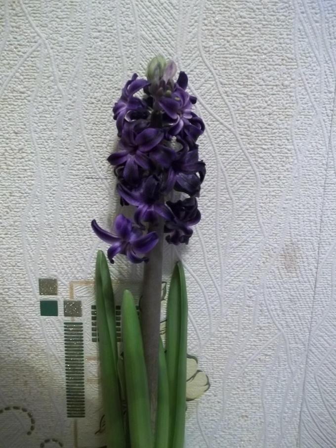Радуйтесь прекрасным ароматом и цветами.