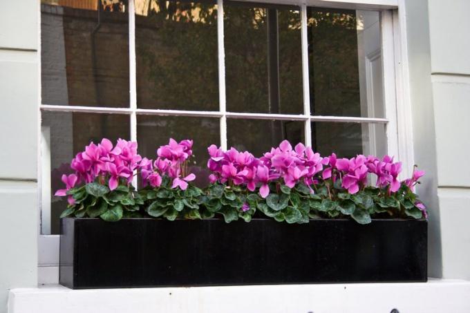 Цветники на окнах – какие растения выбрать