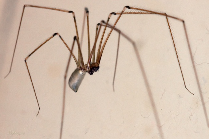 Ways to get rid of spiders in the apartment