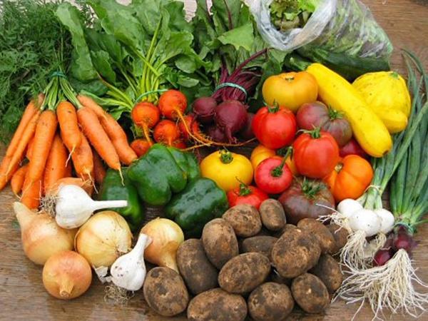 Как распланировать посадку огорода и выбрать семена